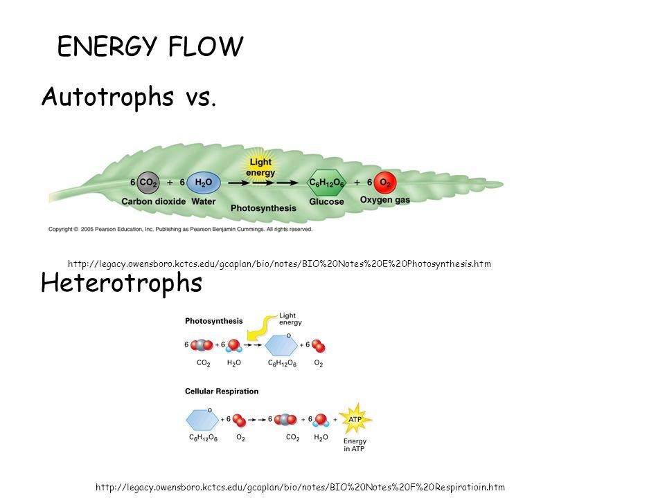 ENERGY FLOW Autotrophs vs.