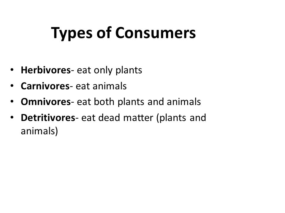Types of Consumers Herbivores- eat only plants Carnivores- eat animals Omnivores- eat both plants and animals Detritivores- eat dead matter (plants an