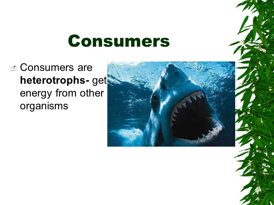 Consumers Consumers are heterotrophs- get energy from other organisms