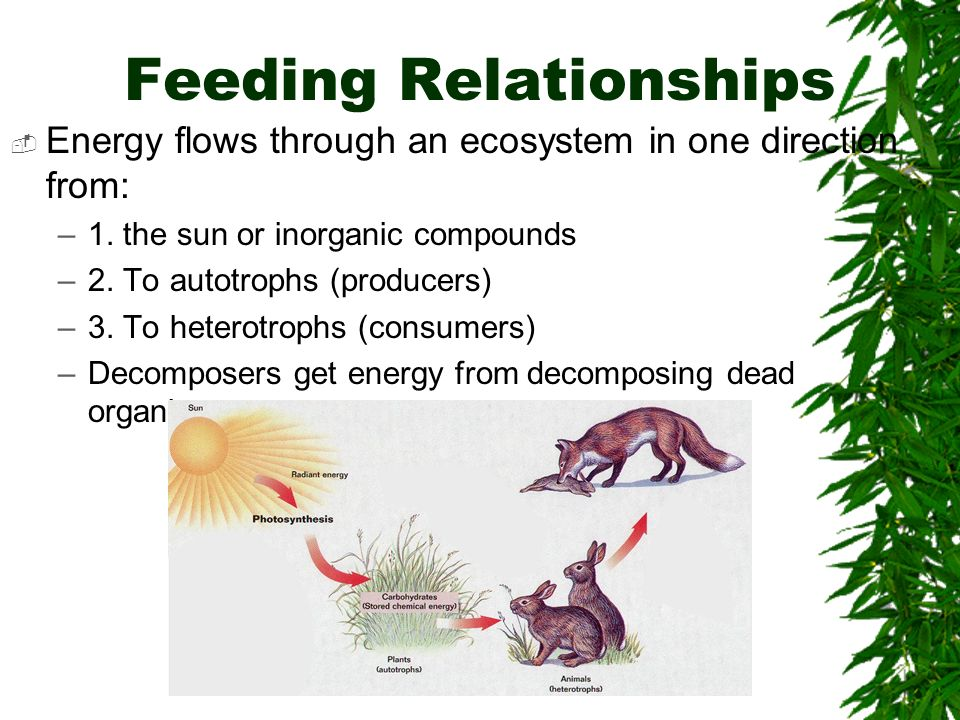 Feeding Relationships Energy flows through an ecosystem in one direction from: –1. the sun or inorganic compounds –2. To autotrophs (producers) –3. To