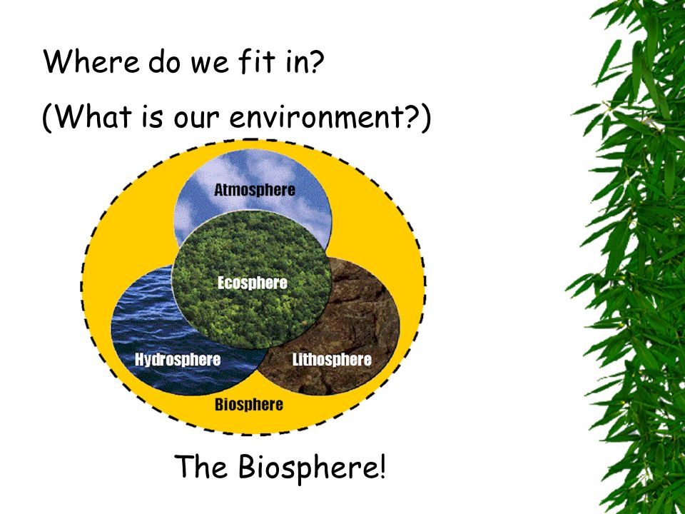 Where do we fit in? (What is our environment?) The Biosphere!