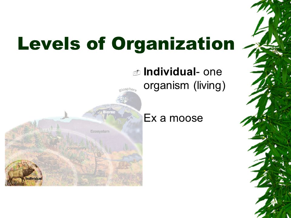 Levels of Organization Individual- one organism (living) Ex a moose