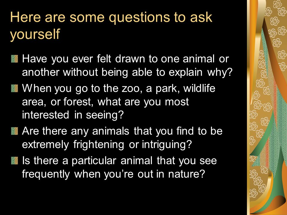 Here are some questions to ask yourself Have you ever felt drawn to one animal or another without being able to explain why? When you go to the zoo, a
