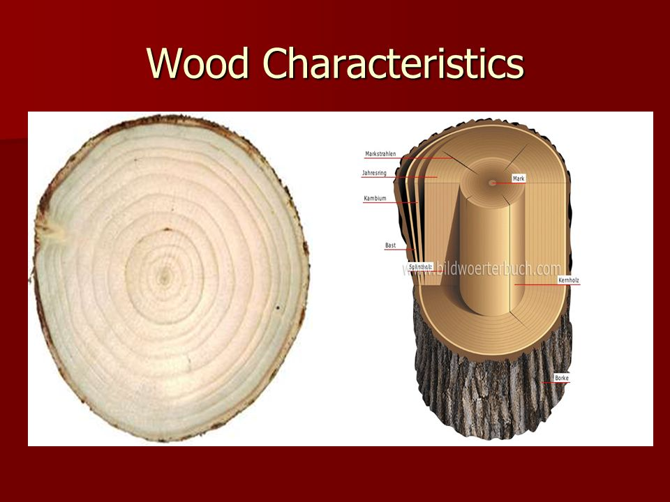 Wood Characteristics Cross-section of tree Split-section of a tree Cross-section of tree Split-section of a tree