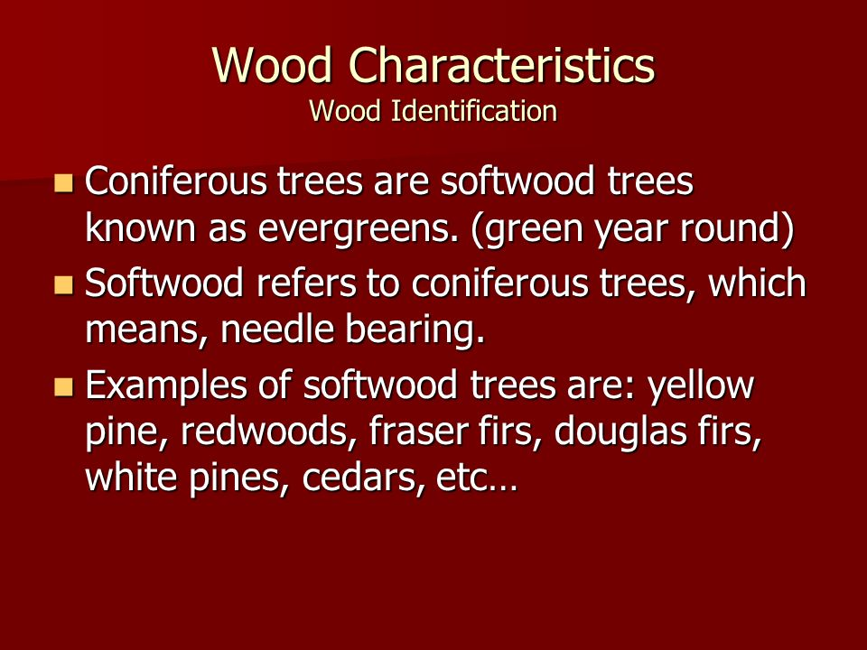 Wood Characteristics Wood Identification Coniferous trees are softwood trees known as evergreens. (green year round) Coniferous trees are softwood tre