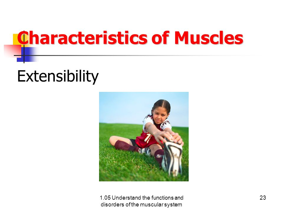 Characteristics of Muscles Extensibility 1.05 Understand the functions and disorders of the muscular system 23