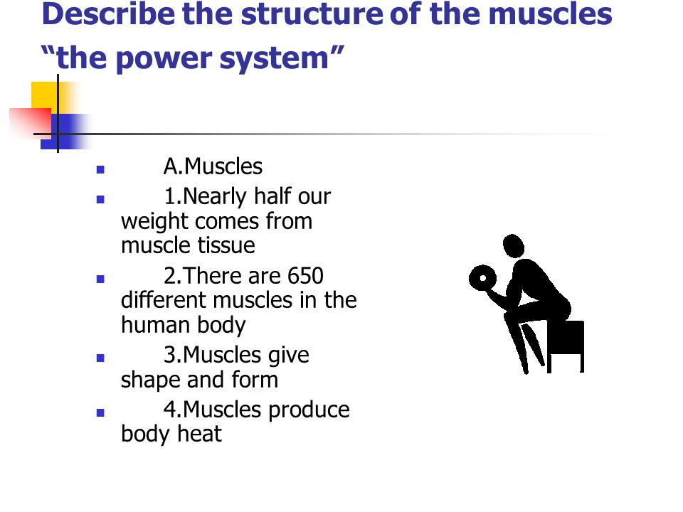 Describe the structure of the muscles the power system A.Muscles 1.Nearly half our weight comes from muscle tissue 2.There are 650 different muscles i