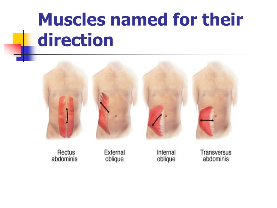Muscles named for their direction
