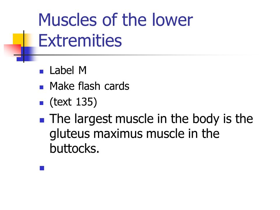 Muscles of the lower Extremities Label M Make flash cards (text 135) The largest muscle in the body is the gluteus maximus muscle in the buttocks.