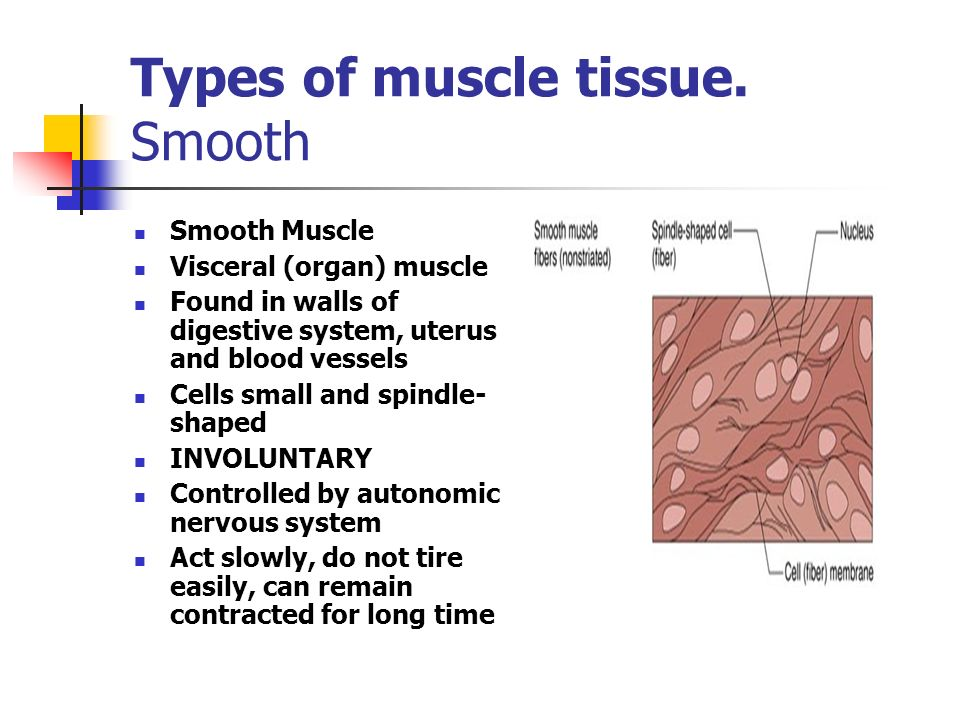 Characteristics of Muscles Contractibility 1.05 Understand the functions and disorders of the muscular system 19