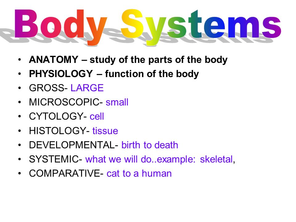 ANATOMY – study of the parts of the body PHYSIOLOGY – function of the body GROSS- LARGE MICROSCOPIC- small CYTOLOGY- cell HISTOLOGY- tissue DEVELOPMEN
