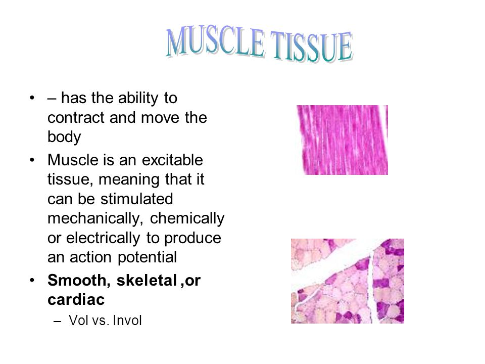– has the ability to contract and move the body Muscle is an excitable tissue, meaning that it can be stimulated mechanically, chemically or electrica