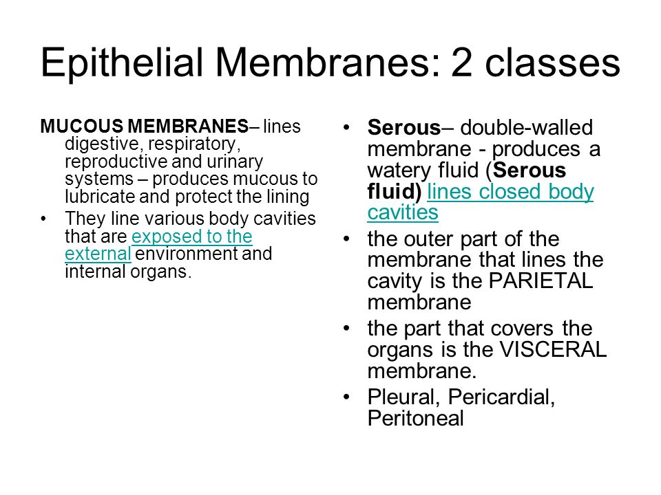Epithelial Membranes: 2 classes MUCOUS MEMBRANES– lines digestive, respiratory, reproductive and urinary systems – produces mucous to lubricate and pr