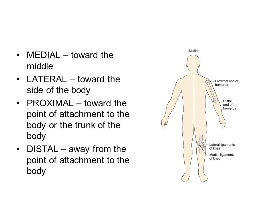 MEDIAL – toward the middle LATERAL – toward the side of the body PROXIMAL – toward the point of attachment to the body or the trunk of the body DISTAL