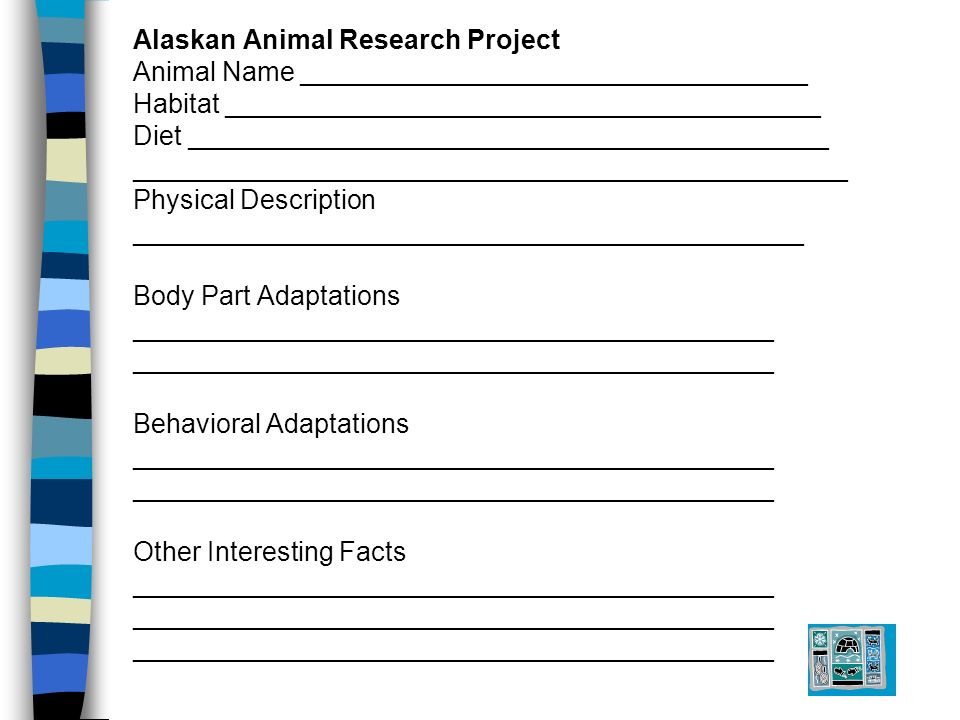 Alaskan Animal Research Project Animal Name __________________________________ Habitat ________________________________________ Diet ___________________________________________ ________________________________________________ Physical Description _____________________________________________ Body Part Adaptations ___________________________________________ Behavioral Adaptations ___________________________________________ Other Interesting Facts ___________________________________________