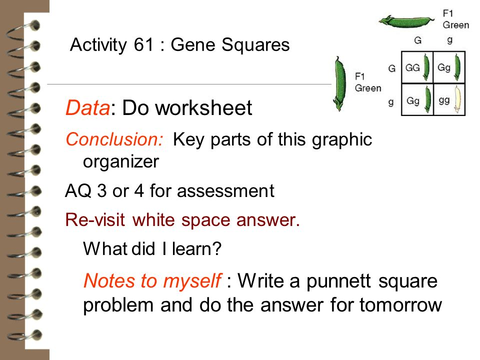 Activity 61 : Gene Squares Data: Do worksheet Conclusion: Key parts of this graphic organizer AQ 3 or 4 for assessment Re-visit white space answer. Wh