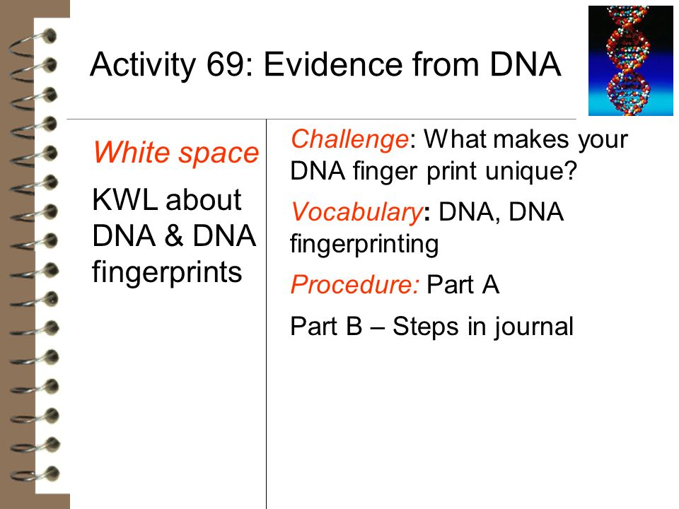 Activity 69: Evidence from DNA White space KWL about DNA & DNA fingerprints Challenge: What makes your DNA finger print unique? Vocabulary: DNA, DNA f