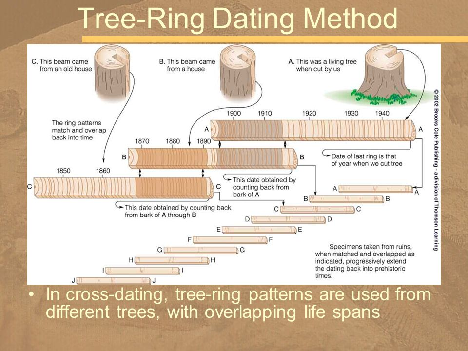 In cross-dating, tree-ring patterns are used from different trees, with overlapping life spans Tree-Ring Dating Method