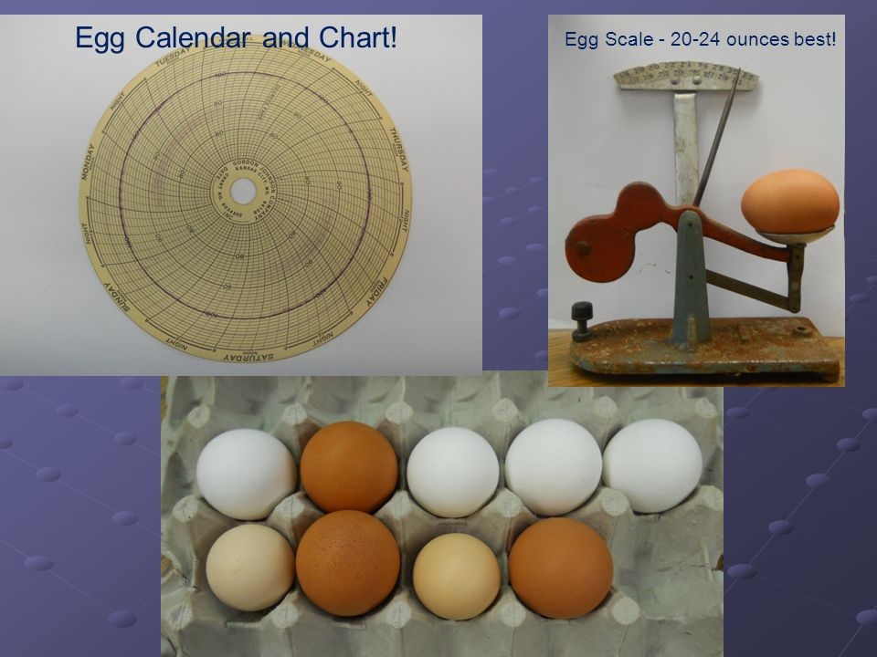 Egg Scale - 20-24 ounces best! Egg Calendar and Chart!