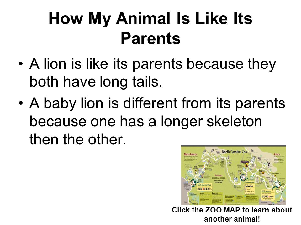 How My Animal Is Like Its Parents A lion is like its parents because they both have long tails. A baby lion is different from its parents because one