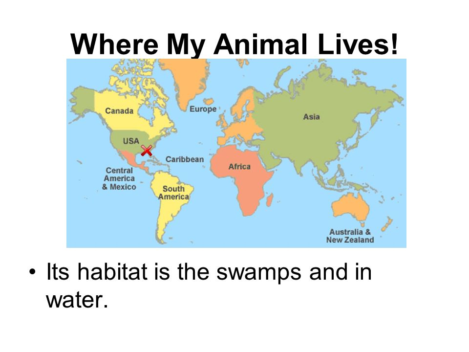 Where My Animal Lives! Its habitat is the swamps and in water.