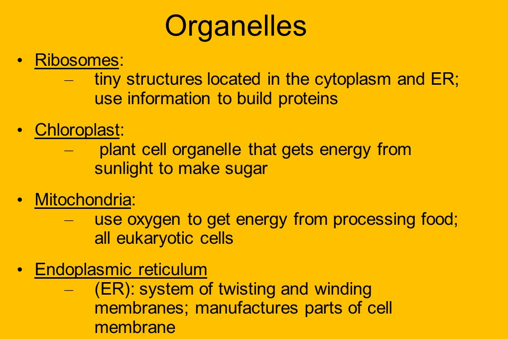 Organelles Ribosomes: – tiny structures located in the cytoplasm and ER; use information to build proteins Chloroplast: – plant cell organelle that ge
