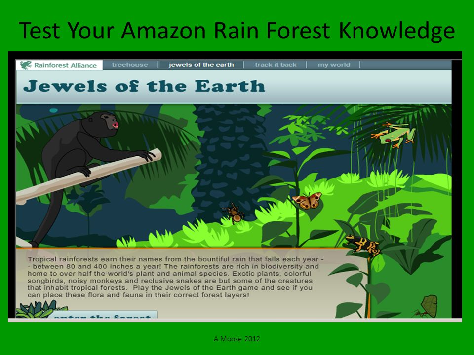 A Moose 2012 Test Your Amazon Rain Forest Knowledge