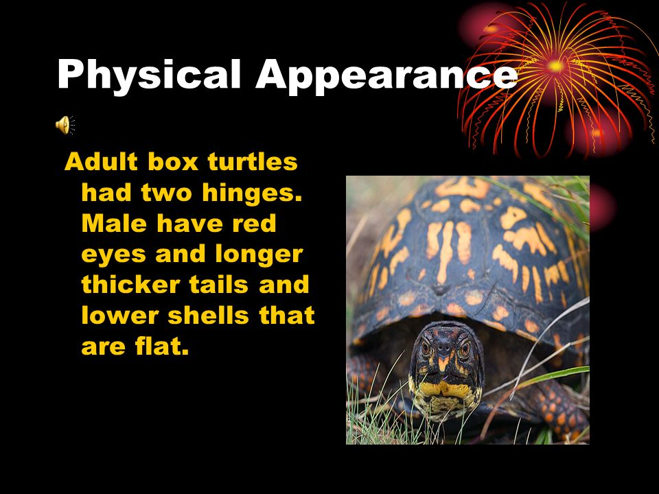 Food Box turtles are carnivores.Adults are herbivorous but they do not eat leaves.