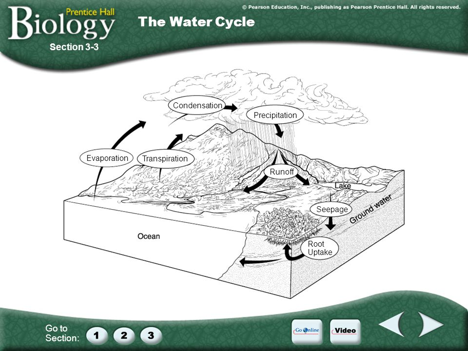 Go to Section: Condensation Seepage Runoff Precipitation Transpiration Evaporation Root Uptake Section 3-3 The Water Cycle