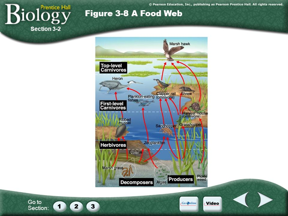 Go to Section: Section 3-2 Figure 3-8 A Food Web