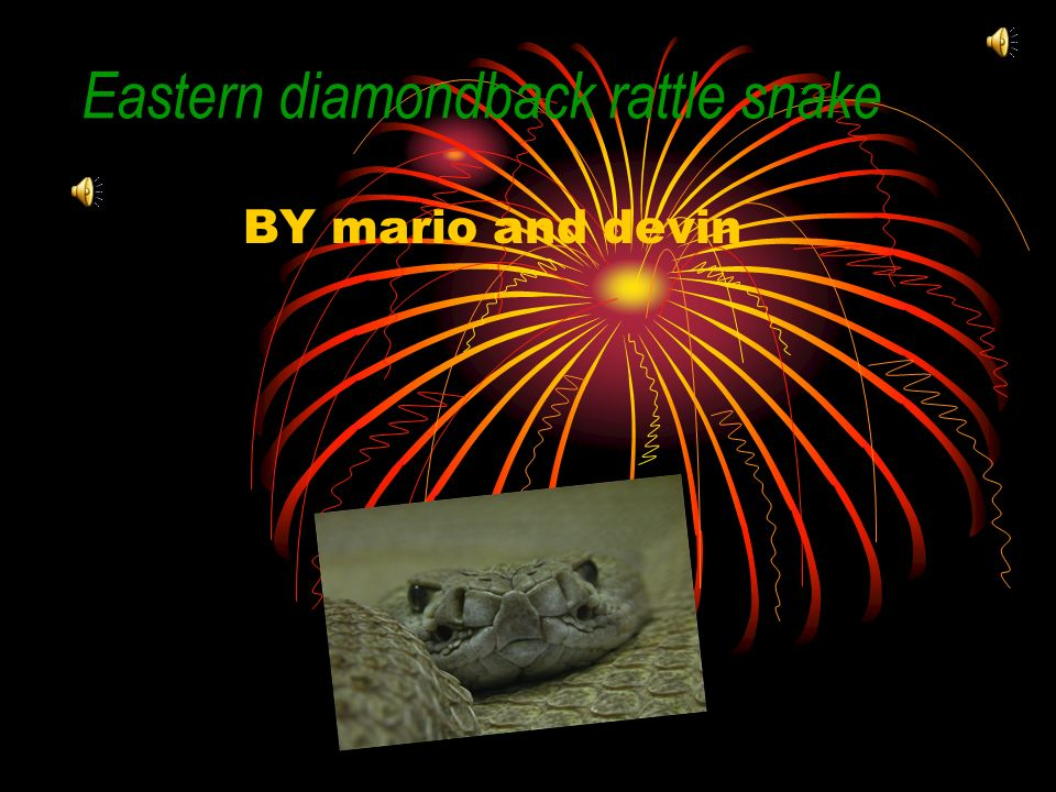 Eastern diamondback rattle snake BY mario and devin