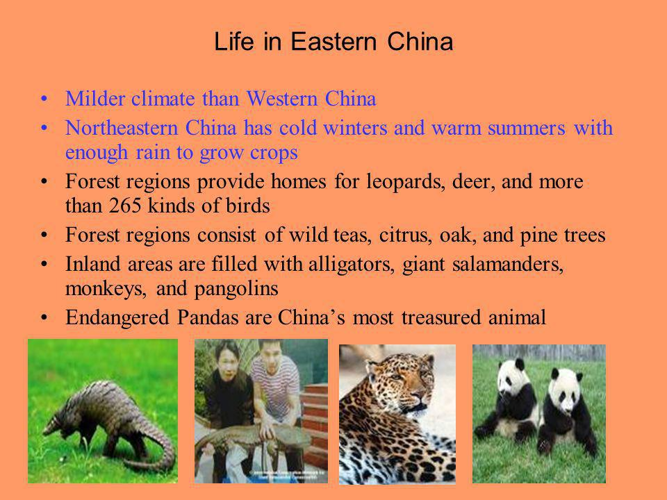 Life in Eastern China Milder climate than Western China Northeastern China has cold winters and warm summers with enough rain to grow crops Forest reg