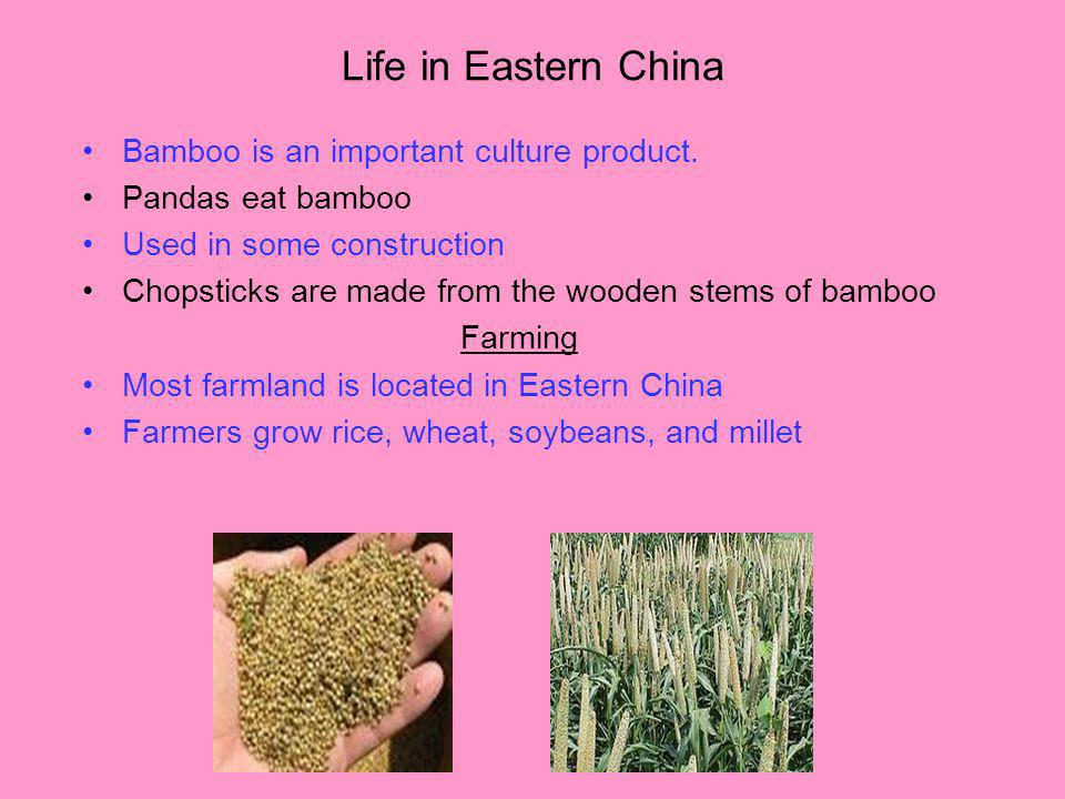 Life in Eastern China Bamboo is an important culture product. Pandas eat bamboo Used in some construction Chopsticks are made from the wooden stems of