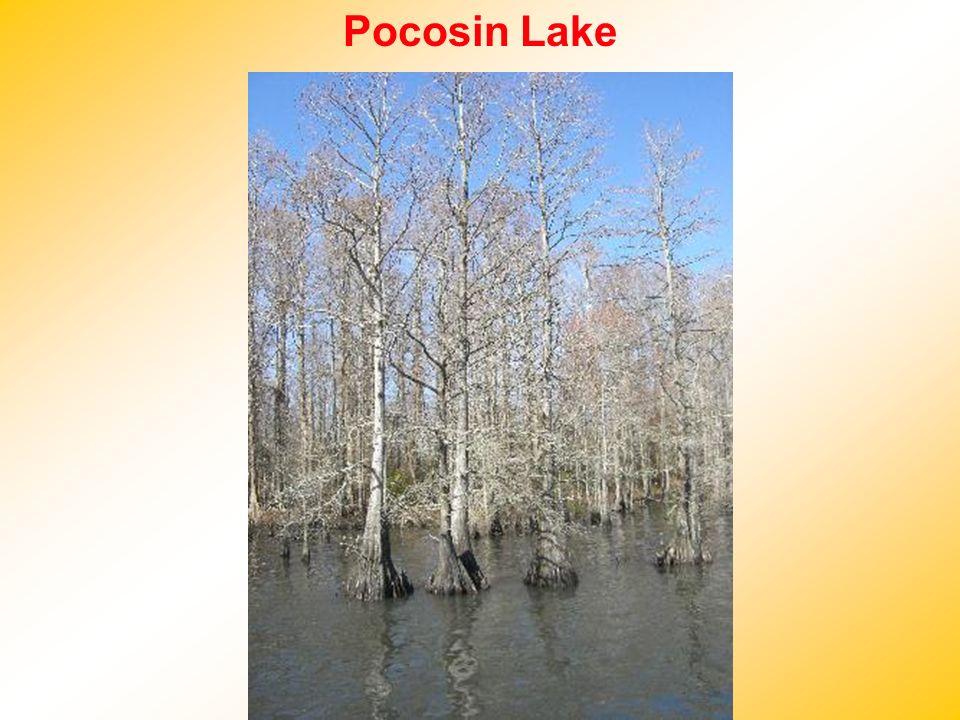 Pocosin Lake