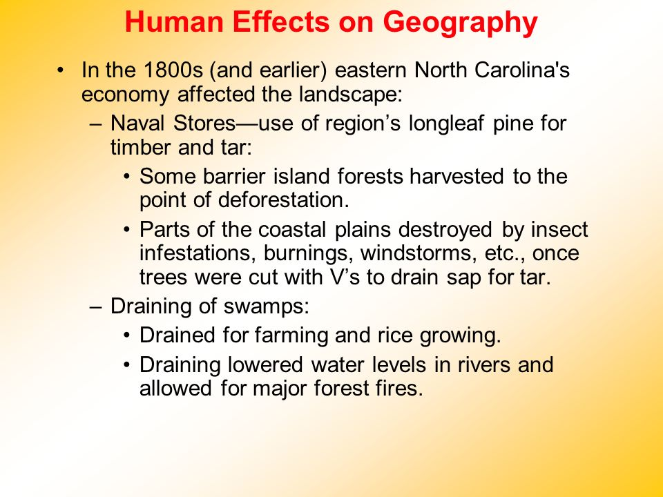 Human Effects on Geography In the 1800s (and earlier) eastern North Carolina's economy affected the landscape: –Naval Storesuse of regions longleaf pi