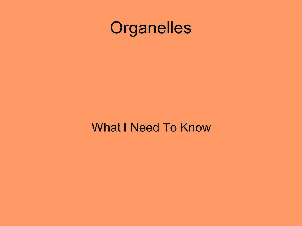 Organelles What I Need To Know