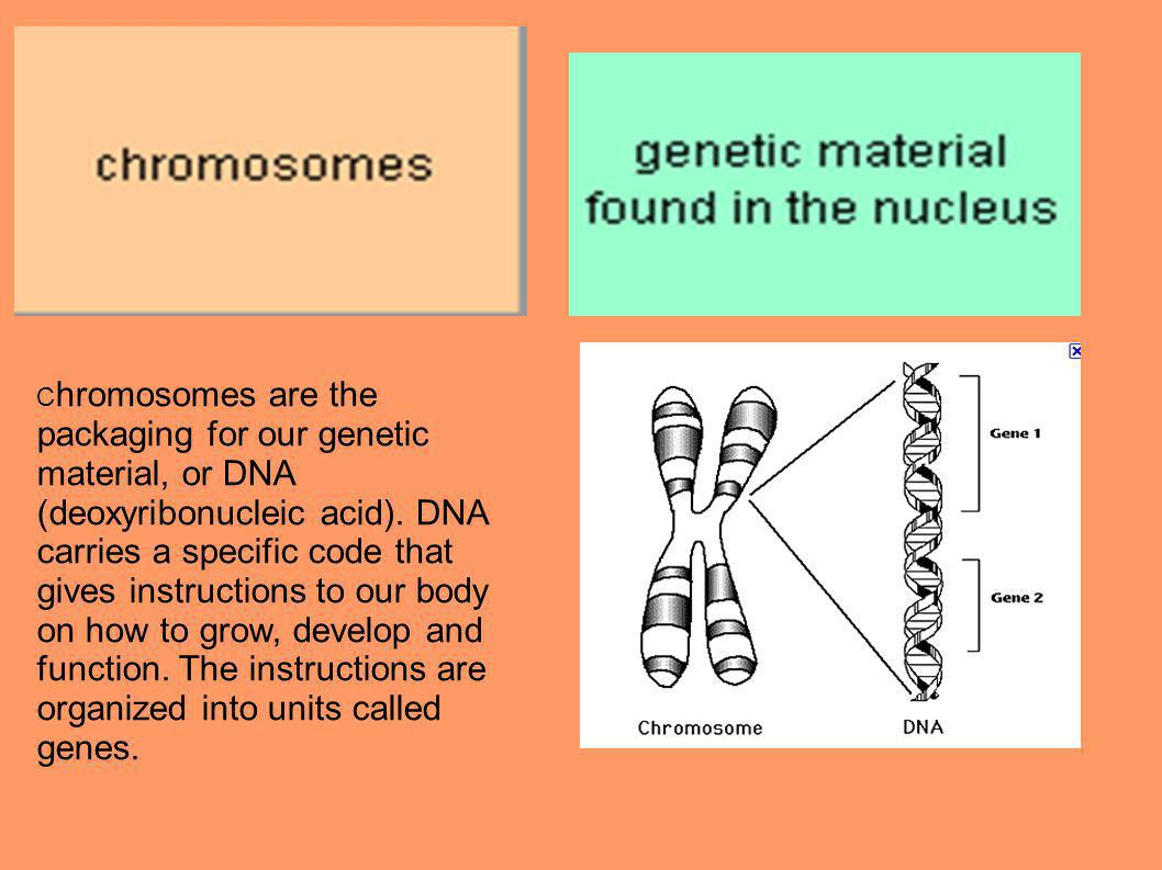 C hromosomes are the packaging for our genetic material, or DNA (deoxyribonucleic acid).