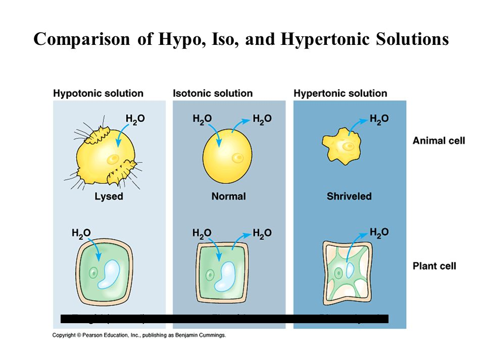 Types of Solutions Hypertonic Solution: Hypertonic Solution: osmosis