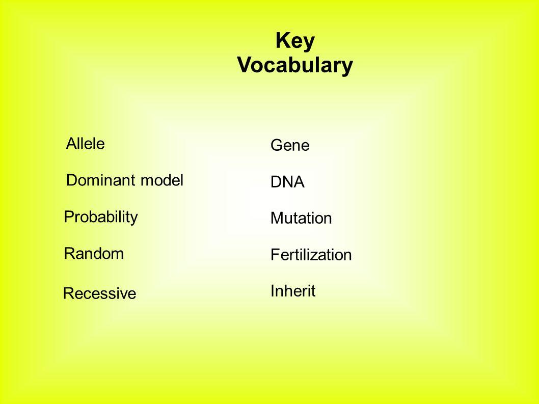 Allele Dominant model Probability Random Key Vocabulary Recessive Gene DNA Mutation Fertilization Inherit