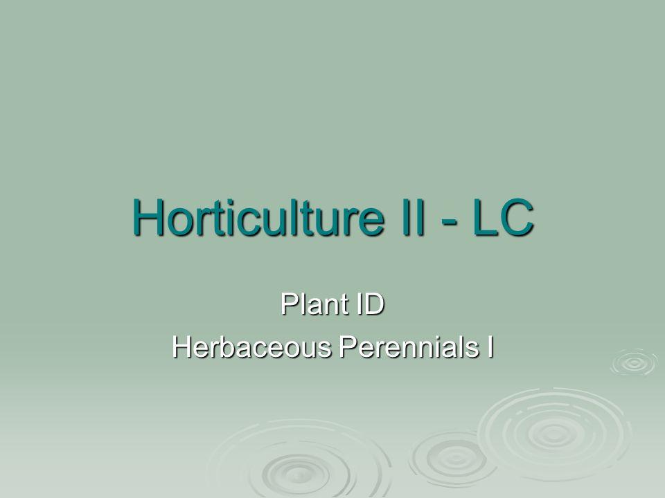 Horticulture II - LC Plant ID Herbaceous Perennials I