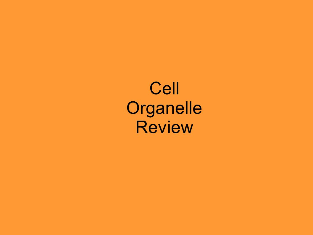 Cell Organelle Review