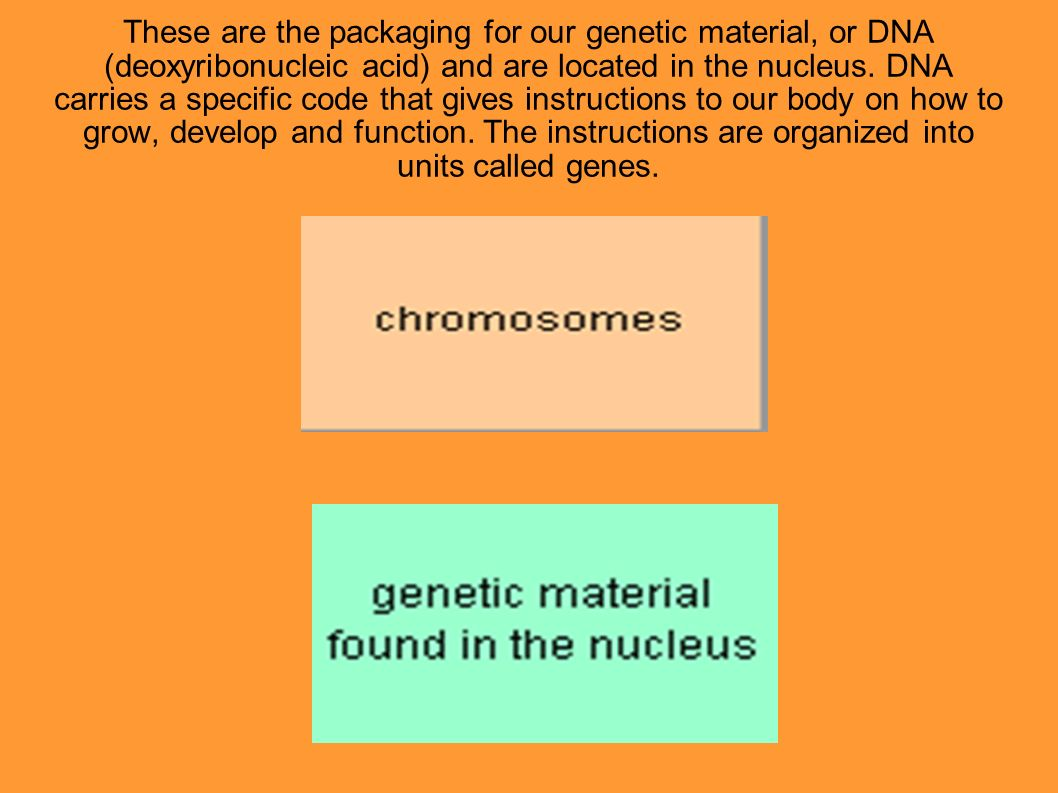 These are the packaging for our genetic material, or DNA (deoxyribonucleic acid) and are located in the nucleus. DNA carries a specific code that give