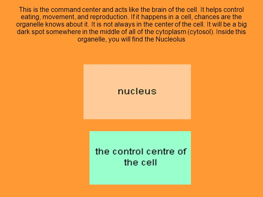 This is the command center and acts like the brain of the cell. It helps control eating, movement, and reproduction. If it happens in a cell, chances
