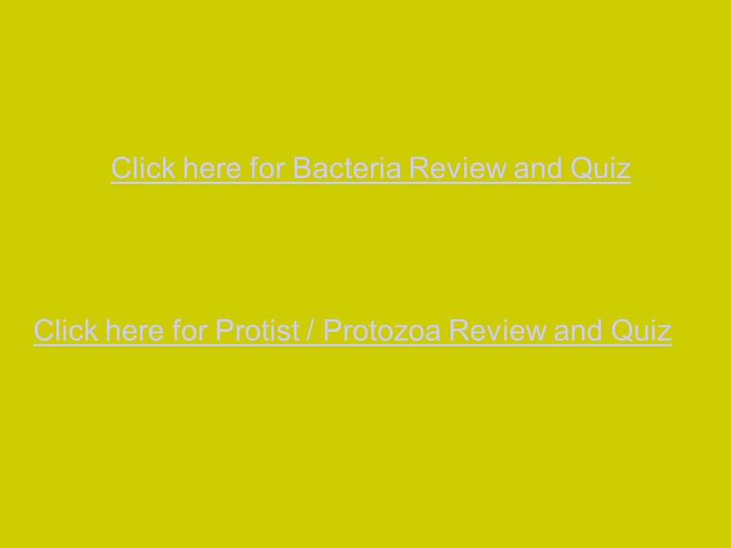 Click here for Bacteria Review and Quiz Click here for Protist / Protozoa Review and Quiz