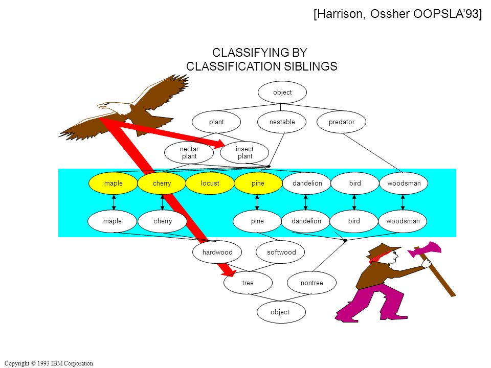 CLASSIFYING BY CLASSIFICATION SIBLINGS nontreetree hardwoodsoftwood object plantnestablepredator insect plant nectar plant dandelion bird woodsman locust maple cherry pine object Copyright © 1993 IBM Corporation [Harrison, Ossher OOPSLA93]