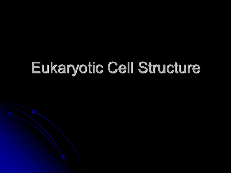 Eukaryotic Cell Structure