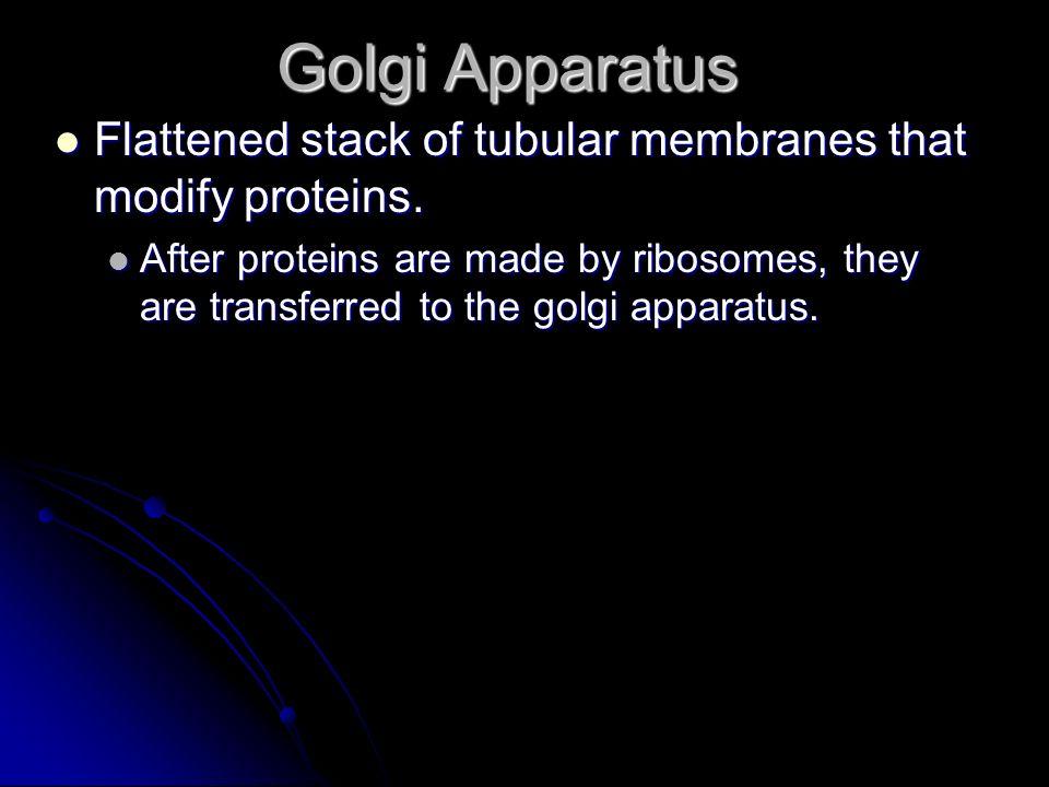 Golgi Apparatus Flattened stack of tubular membranes that modify proteins. Flattened stack of tubular membranes that modify proteins. After proteins a