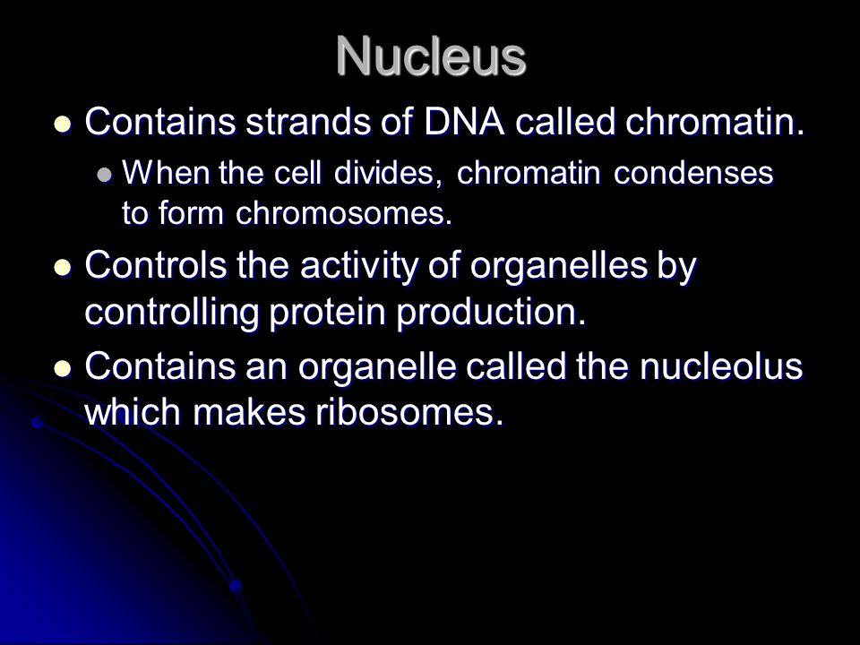 Nucleus Contains strands of DNA called chromatin. Contains strands of DNA called chromatin. When the cell divides, chromatin condenses to form chromos