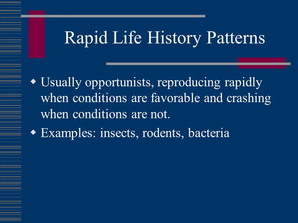 Rapid Life History Patterns Usually opportunists, reproducing rapidly when conditions are favorable and crashing when conditions are not. Examples: in