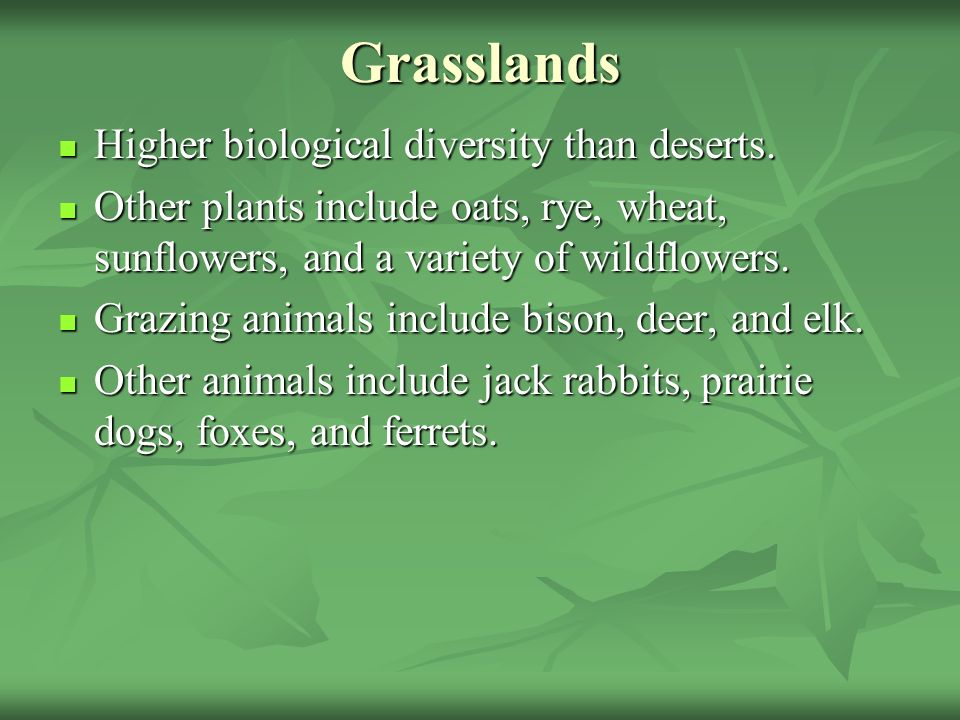 Grasslands Higher biological diversity than deserts. Higher biological diversity than deserts. Other plants include oats, rye, wheat, sunflowers, and